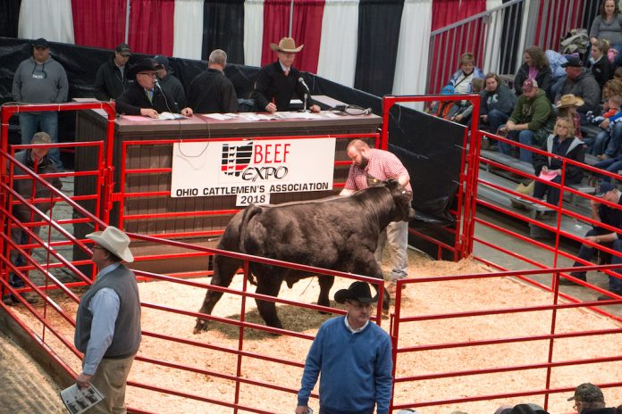 Beef Expo sale ring