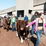 Beef Expo show lineup