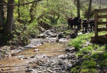 Fencing livestock out of streams