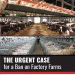 Ban on Factory Farms