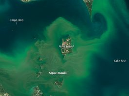 Lake Erie algae bloom