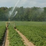 potato field irrigation system