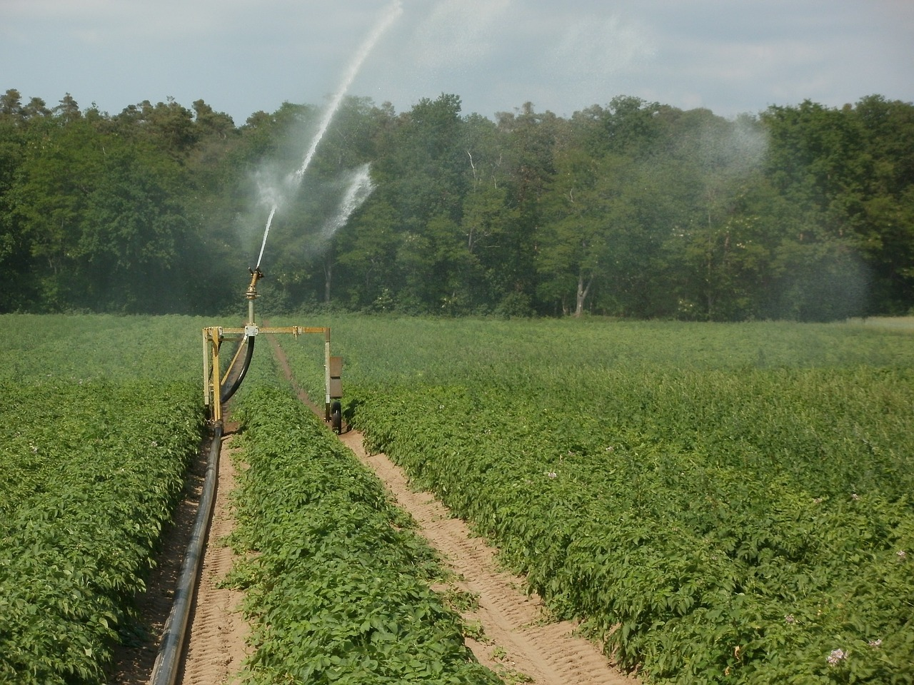 How to choose the right irrigation system - Farm and Dairy