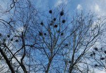 nests in trees
