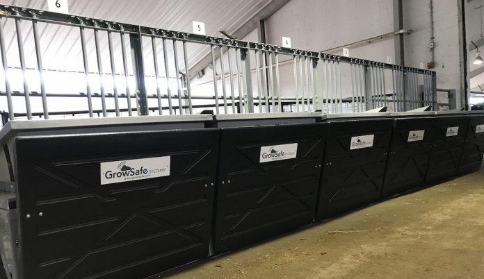Grow-Safe cattle feeding system