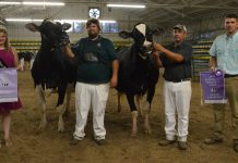 District 7 Ohio Holstein Show