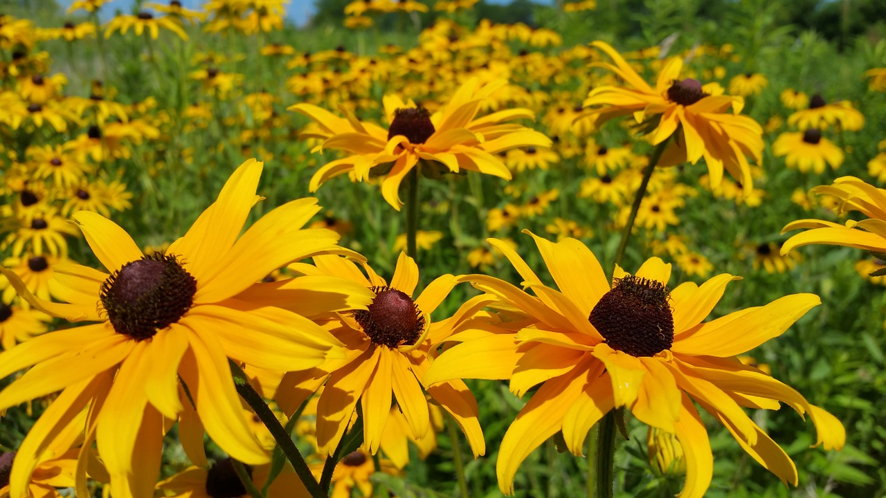 How To Plant A Pennsylvania Wildflower Garden Farm And Dairy