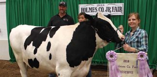 Holmes champion dairy steer