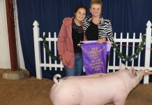 Lawrence County grand champion hog