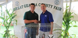 Geauga grand champion meet rabbits