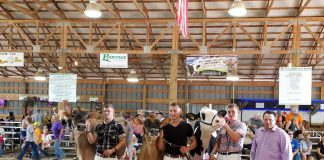 canfield dairy show