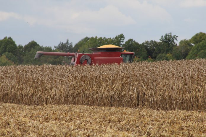 A combine with a full bin of corn.