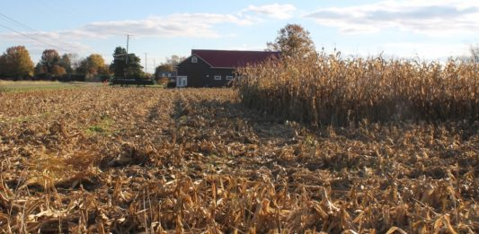 corn field partially harvested