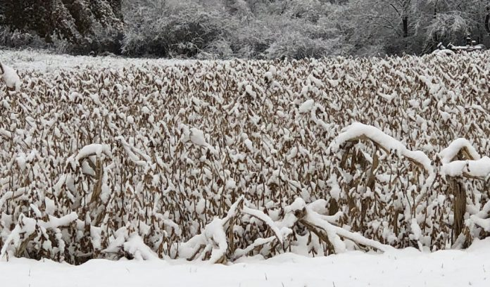 snow-on-soybeans
