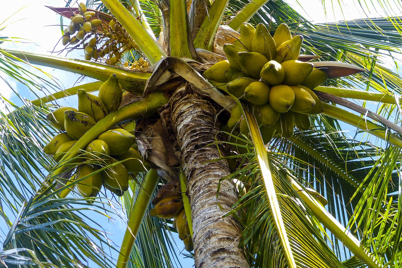 Coconut Oil Compounds Repel Better Than Deet Farm And Dairy