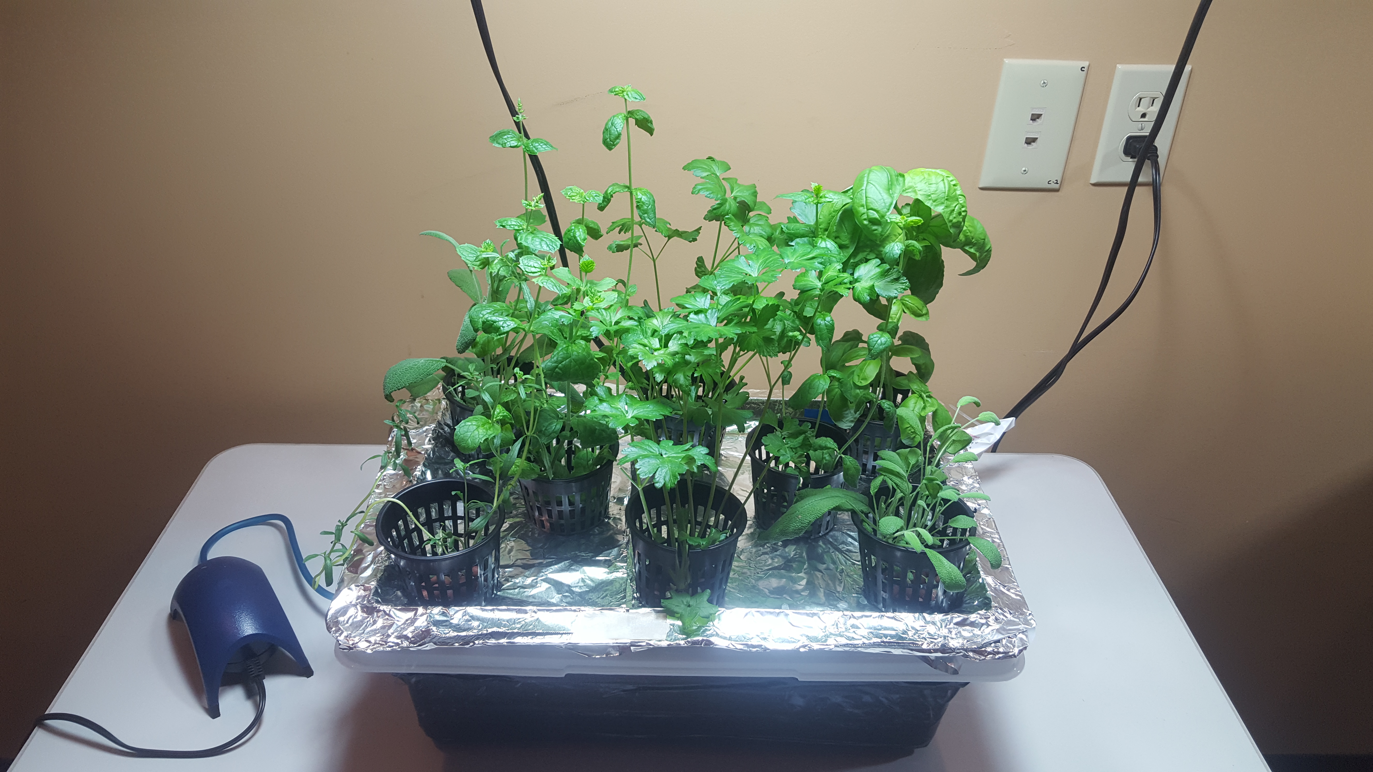 How To Grow A Tabletop Hydroponics Herb Garden Farm And Dairy