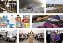 2018 top 10 web stories collage