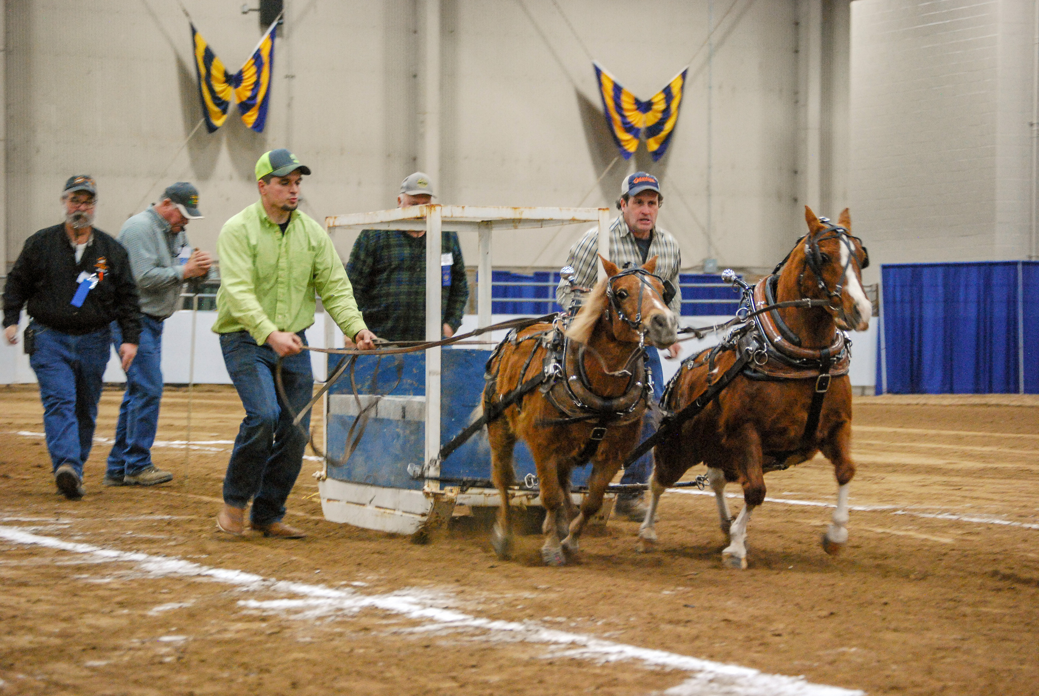 Miniature Horses Pull At Pa Farm Show Farm And Dairy