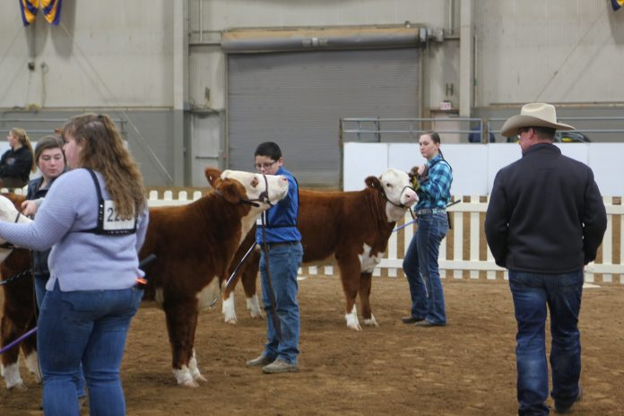 2019 Pennsylvania Farm Show beef cattle show