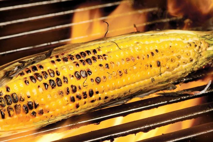 Maple Grilled Corn in the grill.