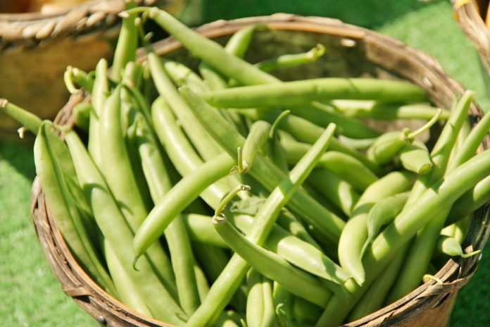 Fresh Picked Green Beans in a basket