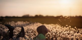 child in a dandelion field
