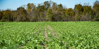 cover crops, NRCS, conservation stewardship program, USDA