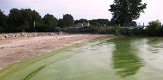 Lake Erie, toxic algal bloom, algae,