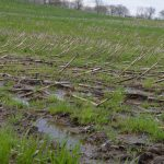 wet field, corn, delayed planting, Ohio farm,