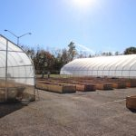 OSU Mansfield, micro-farm, local food,