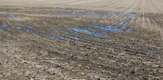 delayed planting, wet field, Ohio farm,