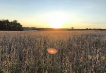 graduation, soybean field, advice for life,