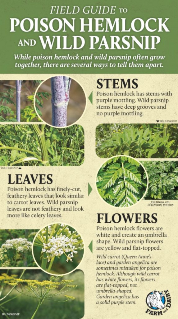 invasive weed field guide