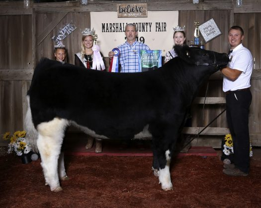 Marshall County Fair reserve champion steer