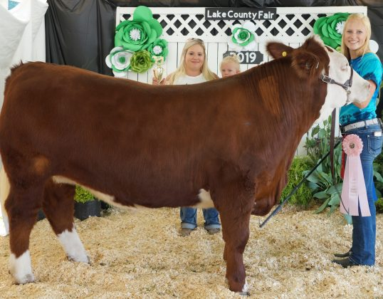 Lake County Fair Reserve Champion Market Beef