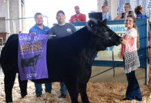 2019 Carroll County Fair Sale Grand Champion Steer