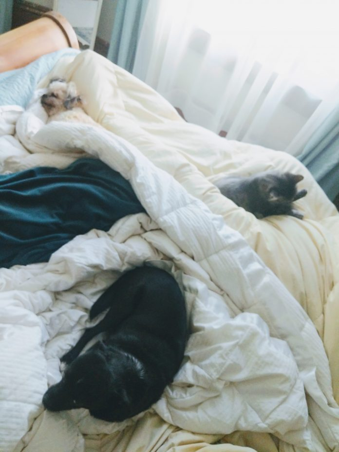 Kym Seabolt's dogs and cat snuggled in bed