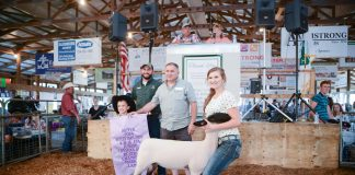Butler County Fair Reserve Champion Lamb
