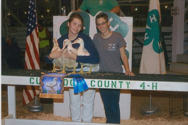 Cuyahoga County Fair Grand Champion Ducks
