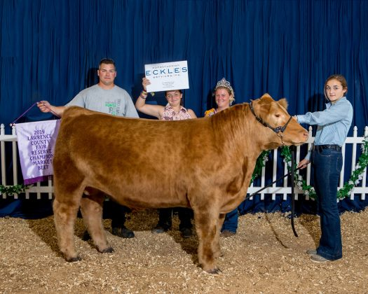 Lawrence County Fair Reserve Champion Steer