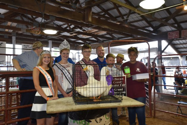 Jefferson County Fair Grand Champion Ducks