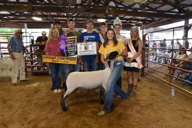 Jefferson County Fair Grand Champion Lambs