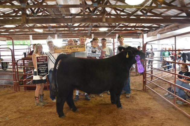 Jefferson County Fair Grand Champion Steer