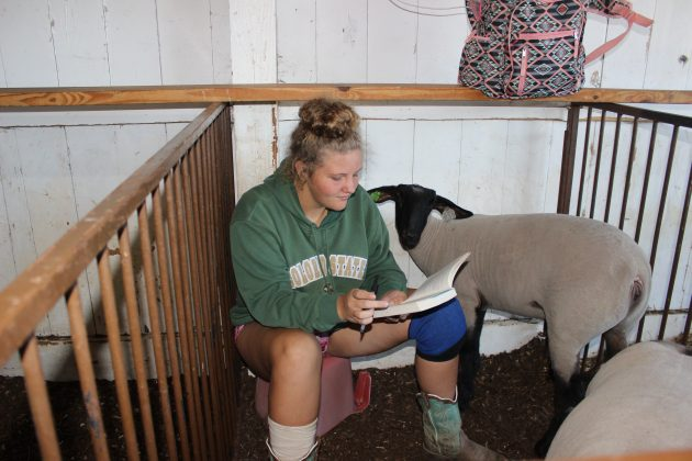 Alexis Monnot sits on a bucket in her sheep's pen at the fair, reading a book for school.