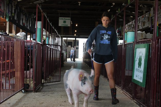 Malena Cybak, 15, walks her hog, Eileen, in the hog barn.