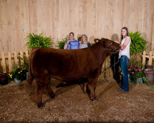 Mercer County Fair Grand Champion Steer