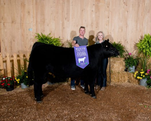 Mercer County Fair Reserve Champion Steer