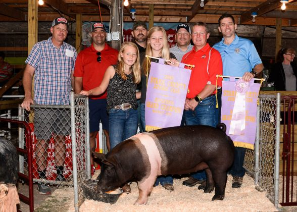 Stark County Fair Reserve Champion Hog