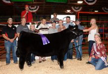 Stark County Fair Grand Champion Steer