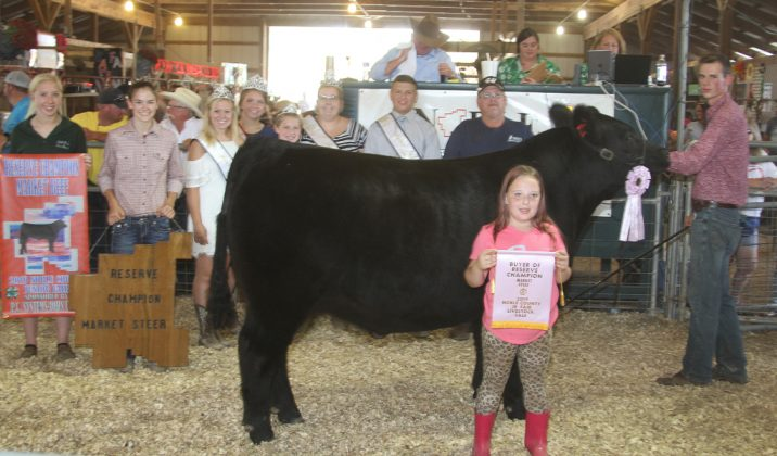 Noble County Fair Reserve Champion Steer